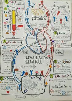 Anatomia y fisiologia orange nails - Orange Things Medicine Notes, Medicine Student, School Motivation, Study Motivation, Rn School, Nursing School Notes, Medical Anatomy, Med Student, Anatomy And Physiology