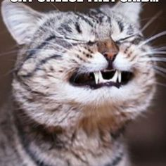 What a Grinner!   #lol  #cat