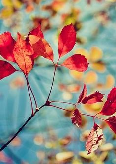 autumn | fall | leaves