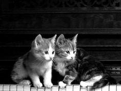 kittens on the keys