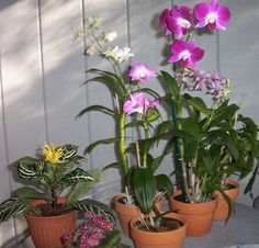 How to Care for Orchids in 11 Steps.  I just got a beautiful Orchid as a gift...praying it survives.