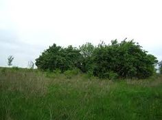 Image result for bushes