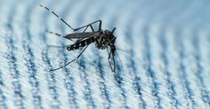 Case for sexual transmission of Zika virus strengthened