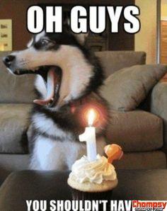 Birthday Dog #comediccanines