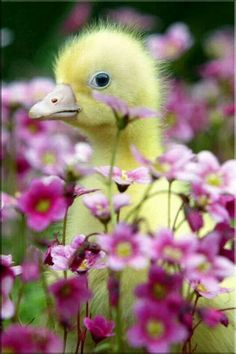 Aww spring chickee~!