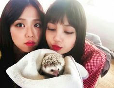 Jisoo & Lisa (with hedgehog! Blackpink Youtube, South Korean Women, Jennie Blackpink, Fandoms, Blackpink Jisoo, Yg Entertainment, Pop Group, K Idols, Korean Girl Groups