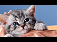 KITTENS LOVE and CUTE CATS COMPILATION - top 10 cutest baby kittens doing funny things - YouTube