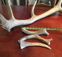 X-LARGE Elk **NATURAL SHED** Antler Premium Dog Chews