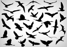 Vector flying birds shilouettes