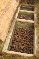 root cellars are easier to build and use than you might imagine and they solve so many problems in storing root crops like potatoes, carrots, beets, onions. In one of the comments it tells where someone sunk a dishwasher in the ground as a root cellar. Permaculture, Farm Gardens, Outdoor Gardens, Potager Bio, Provident Living, Homestead Survival, Survival Food, Root Vegetables, Store Vegetables