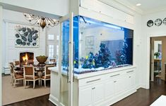 large and small aquariums and tropical fish tanks for modern interior decorating