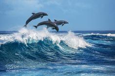 Dolphins - Hawaii 2016, O'ahu island © Vitaliy-Sokol.com My socials: VK: vk.com/vitaly_sokol FB: facebook.com/VitalySokol LJ: vitaly-sokol.livejournal.com  Thx for your opinion.