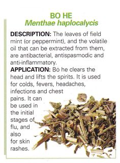 Chinese Herb - BO HE - Menthae haplocalycis    Leaves of the field mint or peppermint