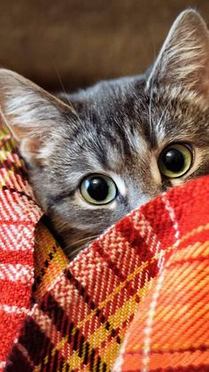 THESE SWEET CAT HOMECOMINGS WILL MAKE YOU WANT TO LEAVE AND COME BACK