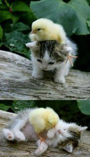 Omg! That is the cutest thing I have ever seen!