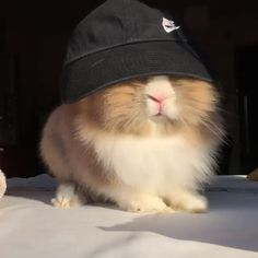 Ideas For Pet Rabbit Cute Friends Cute Baby Bunnies, Funny Bunnies, Cute Funny Animals, Cute Baby Animals, Animals And Pets, Cute Babies, Hamsters, Pet Rabbit, Cute Friends