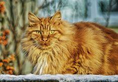 Free Photo: Cat, Feline, Cat Face, Cat'S Eyes - Free Image on Pixabay - 67345