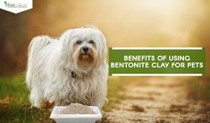 Calcium bentonite clay can not only be used for humans but bentonite clay for pets also. Bentonite clay for pets has major healing properties. Calcium Bentonite Clay, Pets
