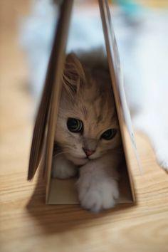 souhailbog: sweet little kitty By Chunsoo Son