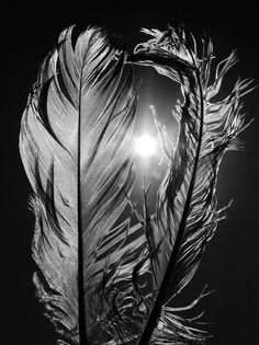 Feathers In The Sun 8x12 Fine Art Photography Wall Art Home Decor Black and White Feather Nature Bird Sun. $25.00, via Etsy.