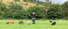 Dog walking Service in Blackwood, Gwent