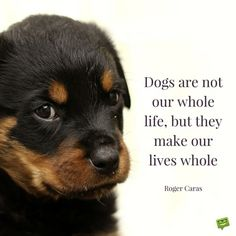 Dogs are not our whole life, but they make our lives whole