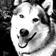 black and white animal photo | Animal black and white pictures animals zone Animals Pictures Black ...