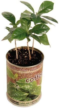 Maybe you could do baby Coffee Trees as favors since she wants to open a cafe one day?