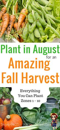 Everything You Can Plant in August for an Amazing Fall Harvest from Your Vegetable Garden. Zone 1 2 3 4 5 6 7 8 9 and 10 included Garden Types, Diy Garden, Garden Hose, Edible Garden, Container Vegetables, Organic Vegetables, Growing Vegetables, Fall Vegetables To Plant, Succulent Containers