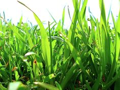 Greens by Ellie Oprea Fine Art America, Nature Photography, Wall Art, Plants, Pictures, Garden, Garten, Planters, Gardening