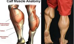 4 BEST CALF EXERCISES Frankly, the calf muscles are insanely stubborn and a pain to grow, which is why most people stop focusing on them altogether. Genetics and a predisposition to explosive calf growth do play a surprisingly large role in that, but equa Lower Body Muscles, Calf Muscles, Gym Workout Tips, Easy Workouts, Workout Routines, Weight Workouts, Workout Men, Workout Plans, Workout Fitness