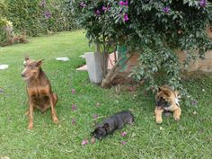 Salomon, Ramona & Oshi