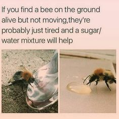 Save the bees please share and you can also offer them honey mixed with a bit of water Animals And Pets, Baby Animals, Funny Animals, Cute Animals, Bee Facts, Save Our Earth, Bee Friendly, Animal Facts, Save The Bees
