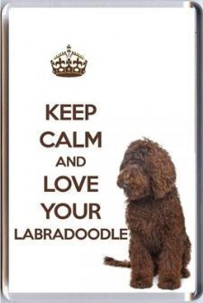 Love your labradoodle