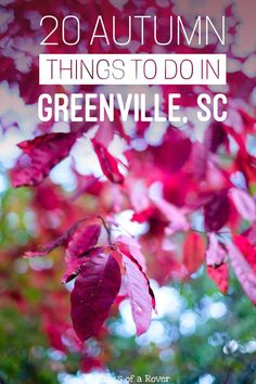 Traveling to Greenville, South Carolina this fall or autumn? Or are you a local looking for something to do this weekend? Here are 20 things to keep you busy! Travel in North America.