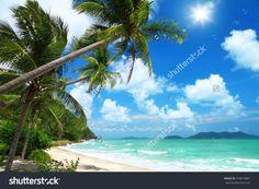 Coconut Palms And Beach In Thailand Стоковые фотографии 103815887 : Shutterstock