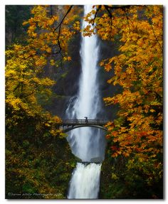 Multnomah Falls Fall Colors. I would love to take photos of these falls. Always went here when I was a little girl.