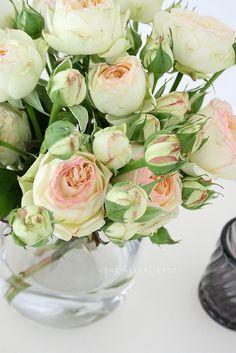 very romantic roses