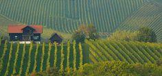 Weinbaugebiet von Erich Rohrauer