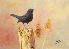 New #wildlife art print, #Blackbird, #wildlife print, #wildlife photography: https://www.etsy.com/listing/264428965/wildlife-art-print-blackbird-wildlife