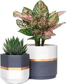Ceramic Flower Pots, Ceramic Planters, Indoor Planters, Garden Planters, Indoor Outdoor, White Planters, Plants Indoor, Flower Planters, Outdoor Plants