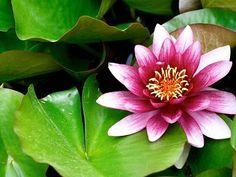 Conoce las acuáticas | Cuidar de tus plantas es facilisimo.com