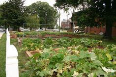 Grant sources for a school garden