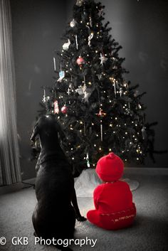 Christmas  picture. Getting them both to sit still... Hmmm