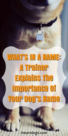 Why your dog's name is so much more than just a name...