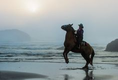 Alex Morley - Google+ - Horse at sunset on the Oregon Coast at Bandon Oregon Bandon Oregon, Oregon Coast, North Bend, Portland, Horses, Sunset, Google, Travel, Viajes
