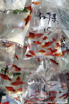 "Goldfish and Flower Market in Hong Kong. Blix says: ""These look more like Platies."""