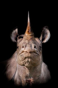 Close up of a rhinoceros (Harman Singh Heer) Ugly Animals, Large Animals, Animals And Pets, Cute Animals, Beautiful Creatures, Animals Beautiful, Animal Original, Rhino Animal, Magnificent Beasts