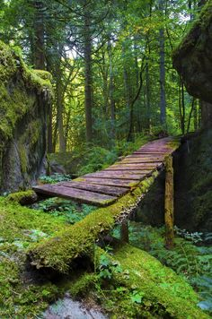 Moss Forest Bridge, British Columbia, Canada  photo via mylittle