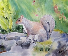 Grey Squirrel - Original Watercolour by CPascoeWatercolours on Etsy